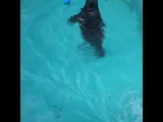 В Центре спасения тюленей показали танцующего Крошика