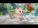 Видео от Британские котята для детей.Plush Blue Ray. Морковкин, 2 месяца.