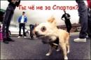 Фотоальбом Вована Спартака