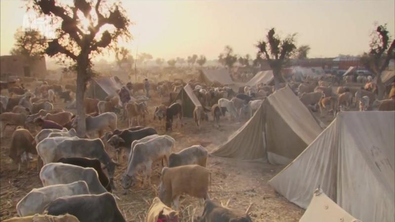 В дебрях Индии 1 серия Пустыня Тар Священные пески
