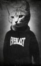 Личный фотоальбом Александра Дейнеги