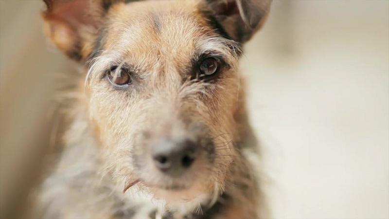 Йозера Josera корм для собак Германия