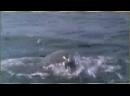 Это видео потрясло весь мир до слёз АЛЛАХУ АКБАР_ - 240P.mp4