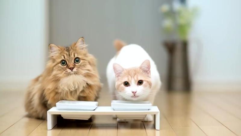 12 самых умных пород кошек в мире