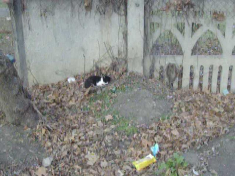 черно- белый котёнок