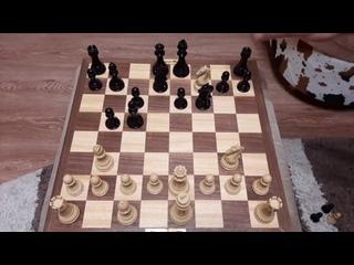 Шахматы. Шокируем соперника хитрым конем. Крутая ловушка. Обучение шахматам