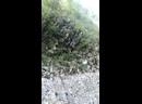 Видео от Дениса Пахунова