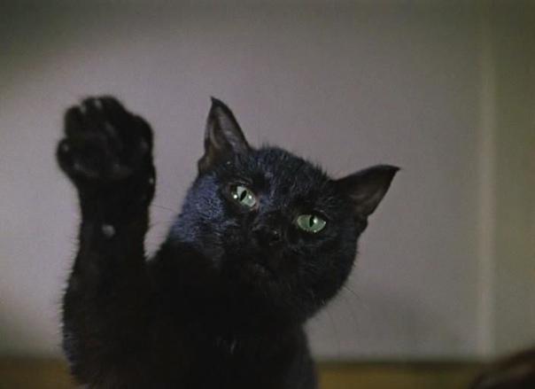 Интересное о талисманах У Леонида Гайдая был талисман, который появлялся во всех его фильмах. Посмотрите еще раз «Иван Васильевич меняет профессию», «Бриллиантовую руку», новеллы «Напарник» и