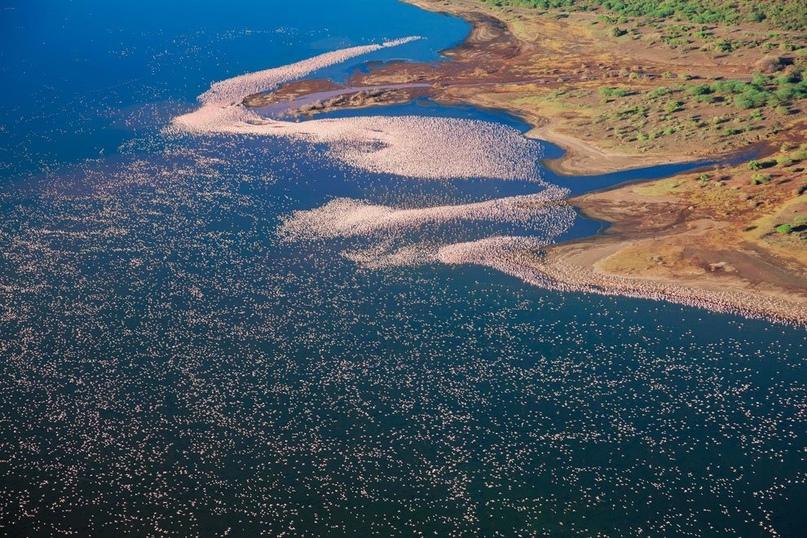 Озеро Накуру находится в 160 км к северо-западу от Найроби. Накуру – одно из озе...