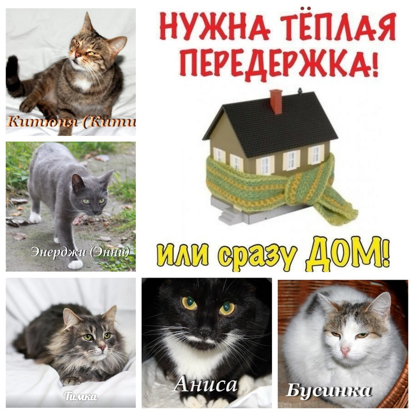 #Минск.🇧🇾 SOS! Коты мини-приюта нуждаются в корме и передержках на время зимы/до...