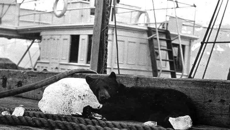 Медведь на службе у Рабоче-Крестьянской Красной Армии!, изображение №3