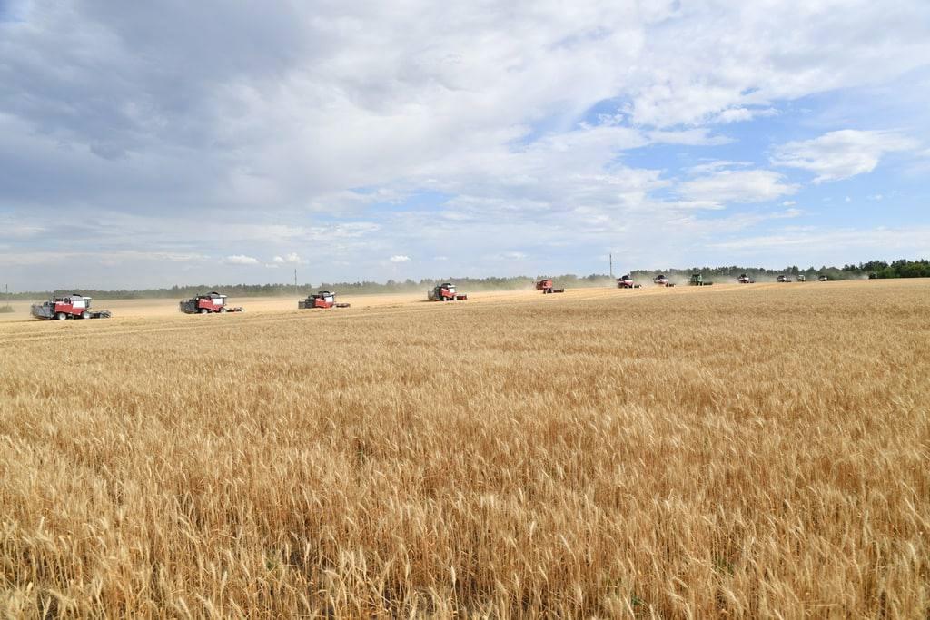 Саратовские сельхозпроизводители собрали 1,8 миллиона тонн зерна нового урожая
