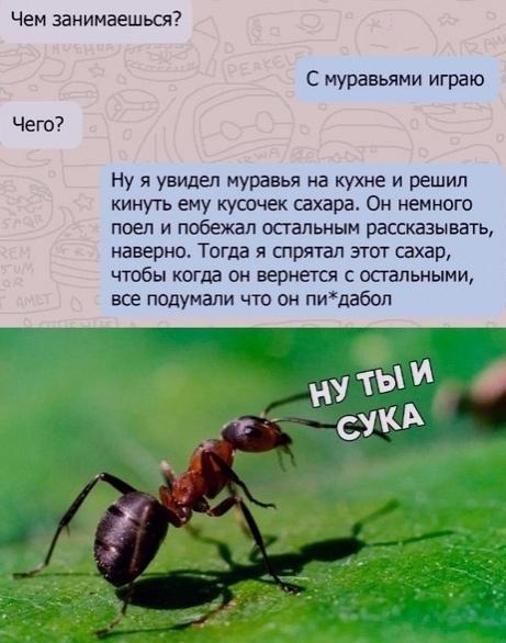 АНТИУТОПИЯ  УТОПИЯ 178152