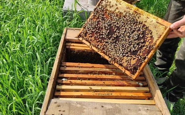 Вкусный мед 🍯 разнотравье, натуральный. Бесплатная...