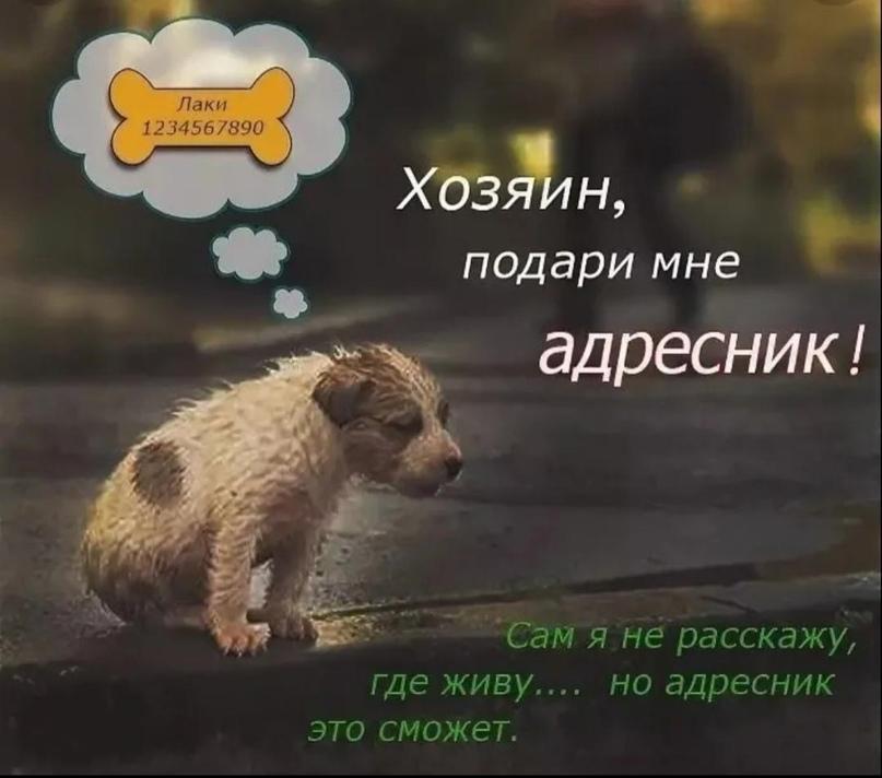 Это универсальный адресник, содержащий | Объявления Орска и Новотроицка №28650