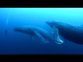 Удивительные, грациозные создания!