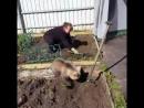 Обычный день в России Медведь помогает сажать картошку