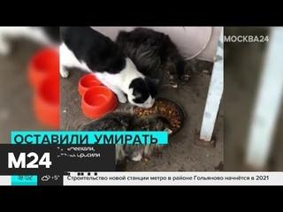 Целая деревня брошенных животных появилась на северо-западе Москвы - Москва 24