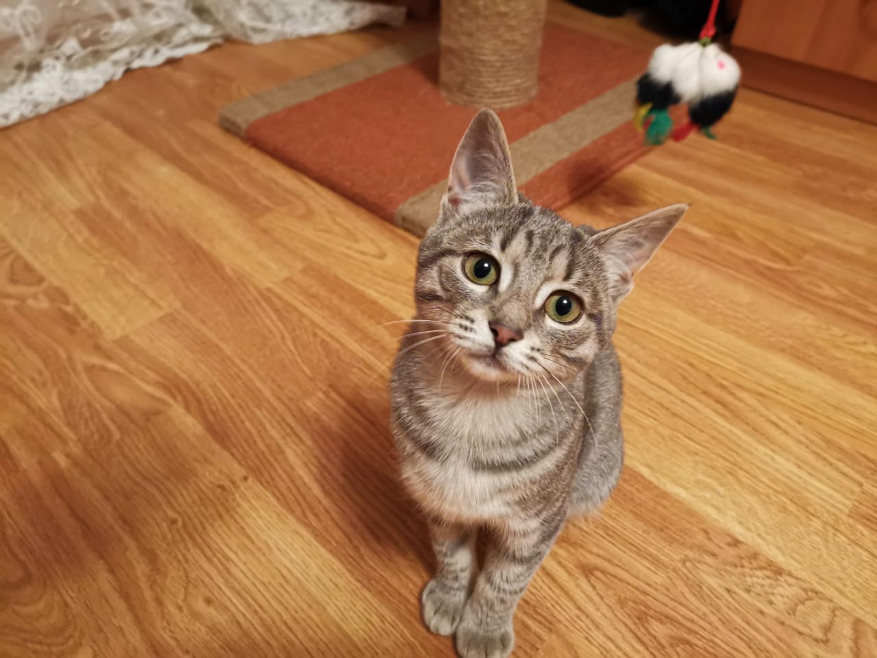 Здравствуйте. Опубликуйте пожалуйста  Кошечка ищет дом. Ей