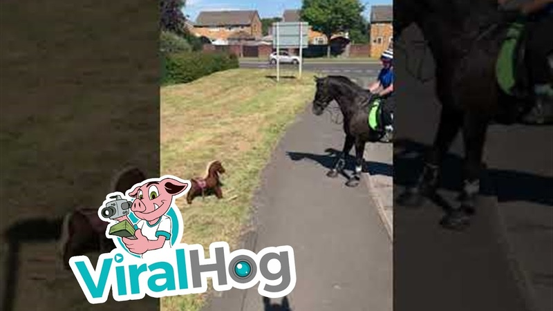 Horse is Unsure About Toy Rocking Horse ViralHog