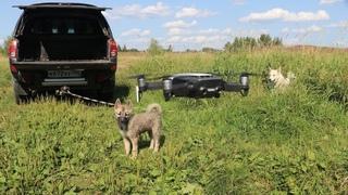 На реке лайки щенок и жужа/Падение дрона/