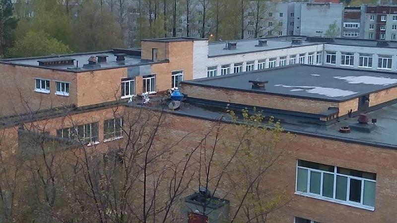 На гимназии уселись чайки крыше