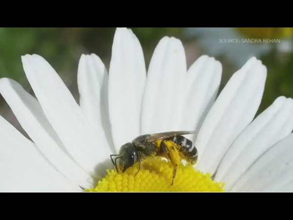 Future of bees in Canada unsure with expanding agriculture