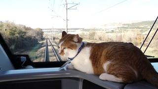 Как кот Мостик в Севастополь на поезде катался - умилительное видео