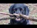 ПРИКОЛЫ С ЖИВОТНЫМИ 😺🐶 Смешные Животные Собаки Смешные Коты Приколы с котами Забавные Животные 93
