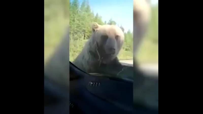 ⚠️🚫⛔🔞 Если верить источникам в группах в whatsapp то сегодня медведь хотел полакомиться консервами в благоварскийрайон
