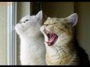 Поющий кот прикол - Песня года 2014 Спокойной ночи малыши Очень смешно