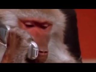 Обезьяна разговаривает по телефону 🤙
