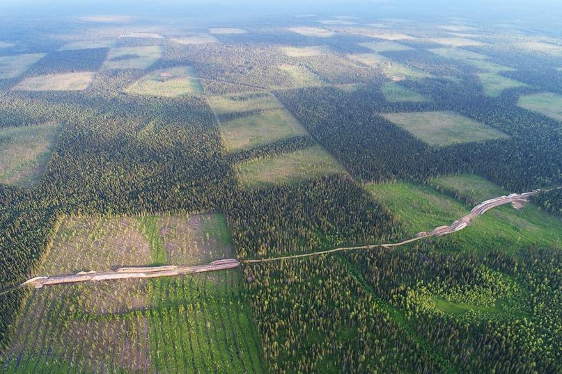 Как сохранить свой лес?, изображение №2