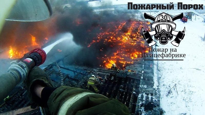 Большой пожар на птицефабрике Пожарный Порох снял на экшн камеру