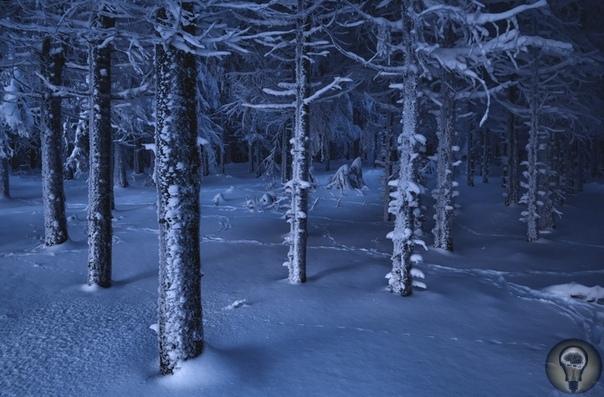 НАСТРОЕНИЕ: ЗИМА. Ч.-1 Когда природа спит. Настроенческий зимний фотосет.Декабрь время, когда хочется впасть в спячку, как медведь, или хотя бы завернуться в теплый плед и ждать весны. Даже